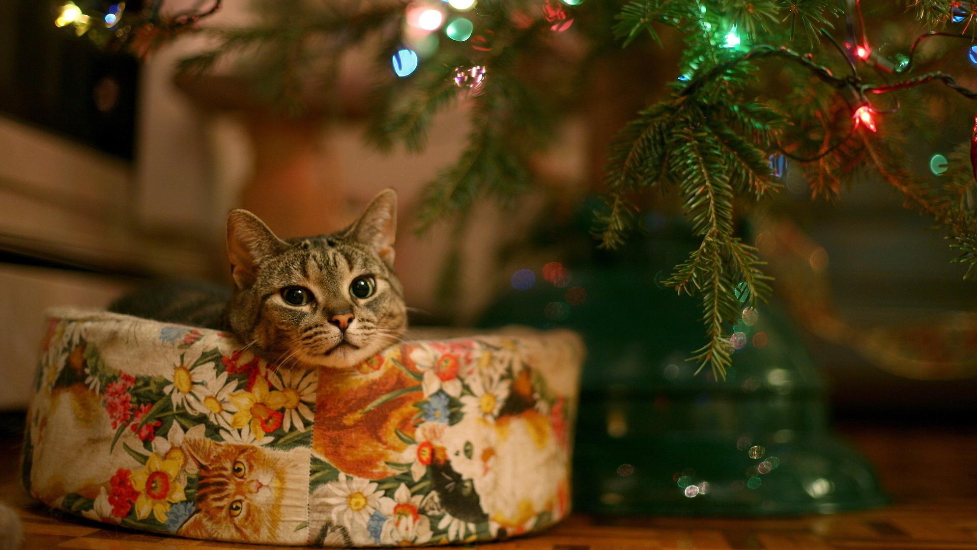 christmas-cat-and-christmas-desktop-wallpapers